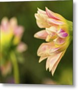 Closeup Of A Colourful Flower Metal Print