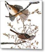 Audubon: Sparrow, (1827-38) Metal Print
