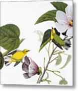 Audubon Warbler Metal Print