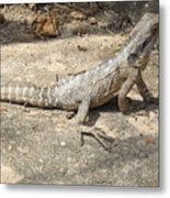 Australian Native Animals Metal Print