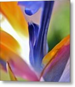 3 Bird Of Paradise Macro Metal Print