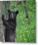 Black Bear Yearling Metal Print