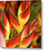 Bunch Of Heliconia Metal Print