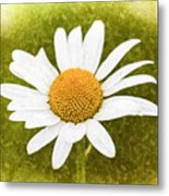 Chamomile Watercolor Metal Print