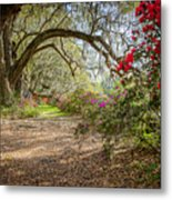 Charlston Sc - Magnolia Plantations And Garden Metal Print