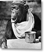 Chimpanzee Metal Print