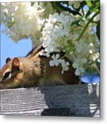 Chipmunk Chillin' On The Railin' Metal Print