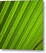 Coconut Palm Leaf Metal Print