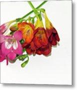 Colorful Freesia Metal Print