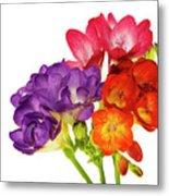 Colorful Freesias Metal Print