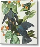 Crowned Pigeon Metal Print