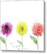 Dahlia Flowers  Metal Print