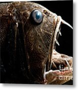 Deep Sea Fangtooth Metal Print
