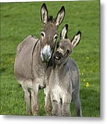 Donkey Mother And Young Metal Print