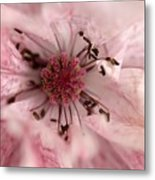 Double Dusty Rose Poppy From The Angel's Choir Mix Metal Print