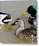 Ducks Metal Print