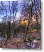 Early Morning Forest Pond Metal Print