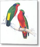 Ed Lear The Parrots Metal Print