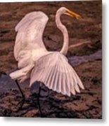 Egret With Fish Metal Print