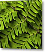 Fern Close-up Of Water Droplets  Metal Print