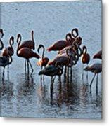 Flamingo Family Metal Print