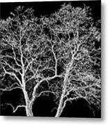 Ghost Trees Metal Print