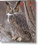 Great Horned Owl Metal Print by Cindy Lindow