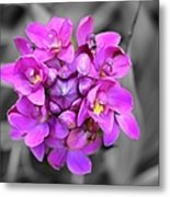 Fuchsia Ground Orchid Metal Print