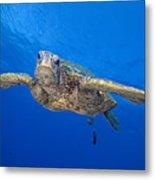 Hawaii, Green Sea Turtle Metal Print