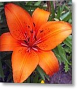 Hemerocallis Flower Metal Print