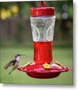 My Sweet Hummingbird Metal Print
