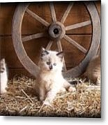 3 Little Kittens With The Wagon Wheel. Metal Print