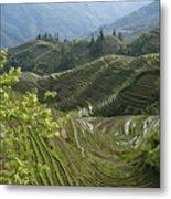 Longsheng Rice Terraces Metal Print