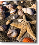Mix Group Of Seashells Metal Print