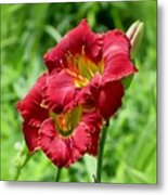 Red Lily Pair Metal Print