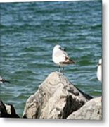 3 Of Them At Sea Metal Print