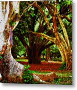 Old Freinds Metal Print