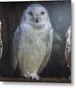 3 Owls On A Branch Metal Print