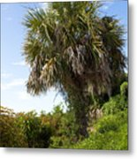 Pelican Island In Florida Metal Print