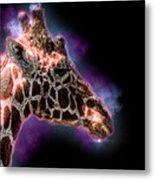 Reticulated Giraffe, Samburu, Kenya Metal Print