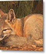 San Joaquin Kit Fox  Metal Print