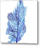 Sea Fan Metal Print