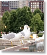 3 Seagulls In A Row Metal Print