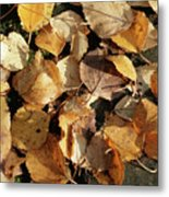Silver Birch Leaves Lying On A Brick Path In A Cheshire Garden On An Autumn Day   England Metal Print