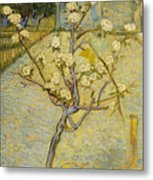 Small Pear Tree In Blossom Metal Print