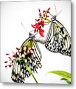 The Extraordinary Rice Paper Butterfly A Series Metal Print