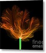 Tulips, X-ray Metal Print