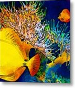 Underwater. Fish. Metal Print