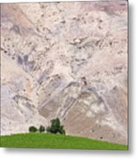 Vines In The Atacama Desert Chile Metal Print