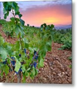 Vineyards Metal Print